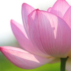 ウチの子だけなぜできない!?「世界に一つだけの花」と「阿弥陀経」が教えてくれた事